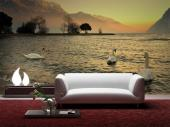 Swans - Animals Wall Murals & Posters