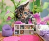 Kitten - Animals Wall Murals & Posters