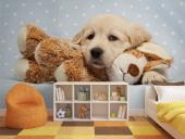 Puppy - Animals Wall Murals & Posters