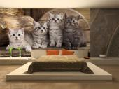 Kittens - Animals Wall Murals & Posters