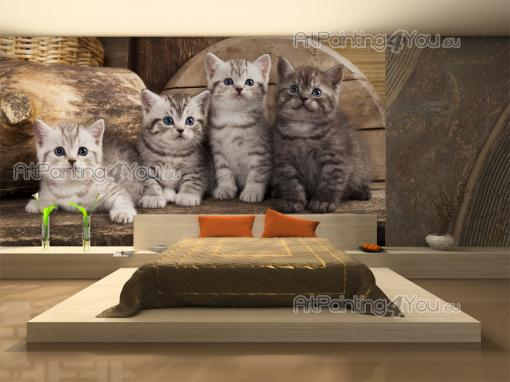 Chatons - Papier Peint Animaux & Posters Muraux