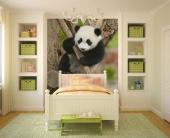 Panda Bear - Animals Wall Murals & Posters