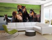 Horses - Animals Wall Murals & Posters