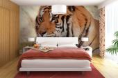 Tiger - Animals Wall Murals & Posters