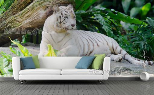 White Tiger - Animals Wall Murals & Posters