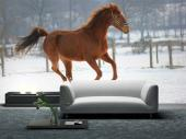Horse on the Snow - Animals Wall Murals & Posters