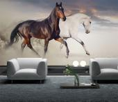 White and black horses - Animals Wall Murals & Posters