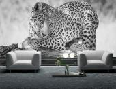 Leopard - Black and White Wall Murals & Posters