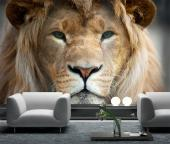 Lion - Animals Wall Murals & Posters
