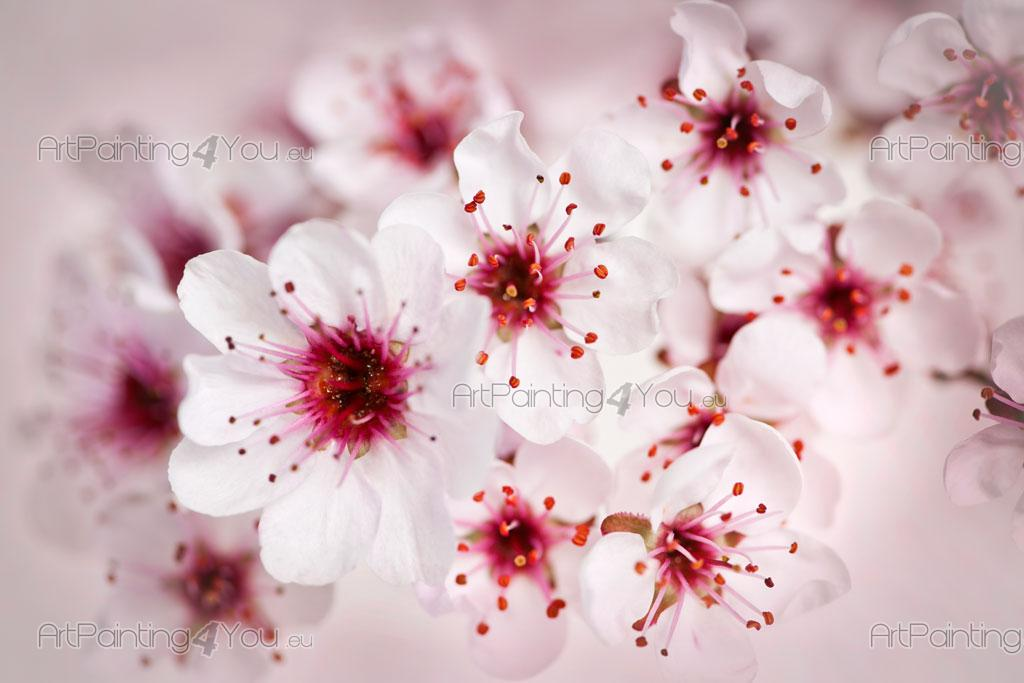 ... Cherry Blossoms   Wall Murals Flowers U0026 Posters