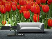Tulips - Wall Murals Flowers & Posters