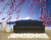 Cherry Blossoms - Wall Murals & Posters