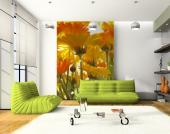 Yellow Daisies - Wall Murals Flowers & Posters