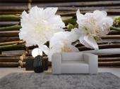 Cherry Blossoms & Bamboo - Wall Murals Flowers & Posters