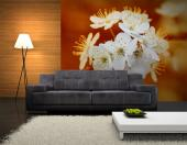 Cherry Flowers - Wall Murals Flowers & Posters