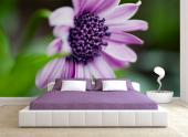 Purple Flower - Wall Murals Flowers & Posters