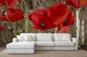 Poppies - Wall Murals Flowers & Posters