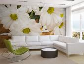 White Gerbera - Wall Murals Flowers & Posters