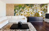 White Daisy Flower - Wall Murals Flowers & Posters