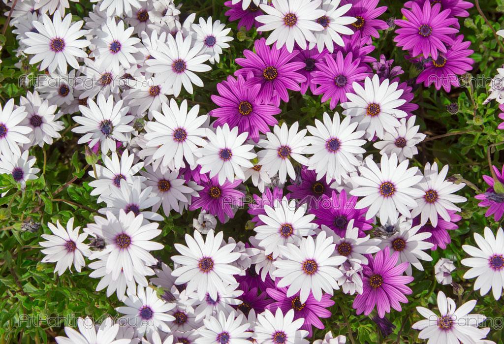 Papier peint poster fleur marguerite artpainting4you - Image fleur marguerite ...