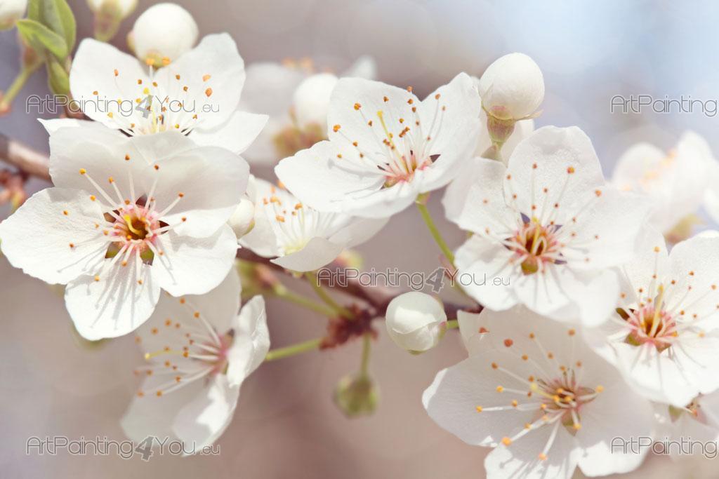 Murais e Papel de Parede Flores de Cerejeira   ArtPainting4You.eu ...