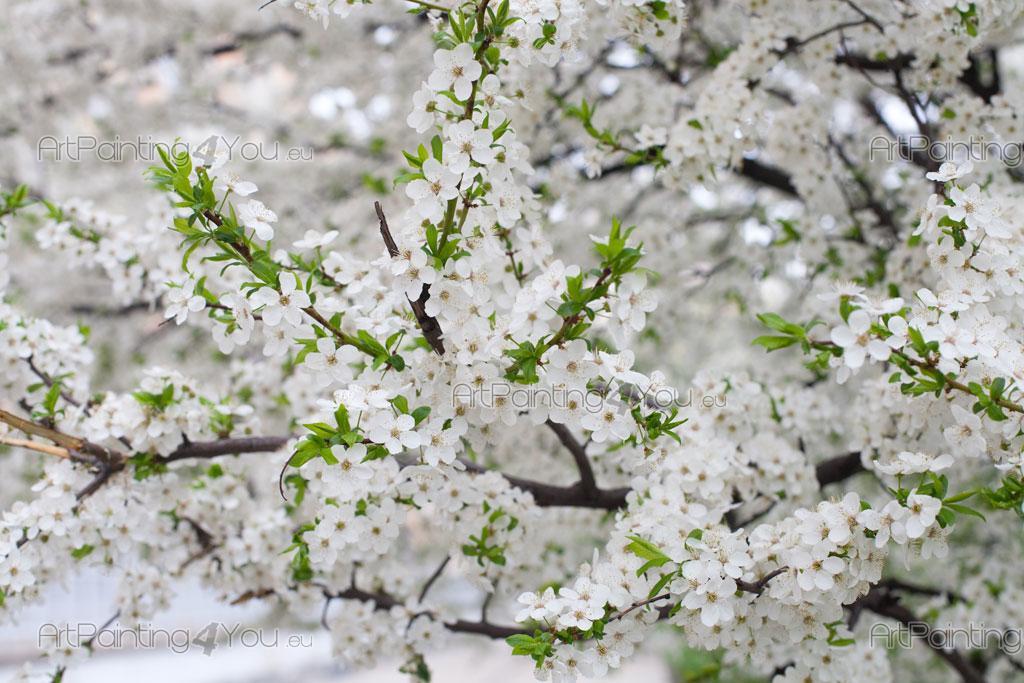 Fleurs de cerisier papier peint poster mcf1079fr - Papier peint fleur de cerisier japonais ...