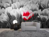 Tulips - Black and White Wall Murals & Posters