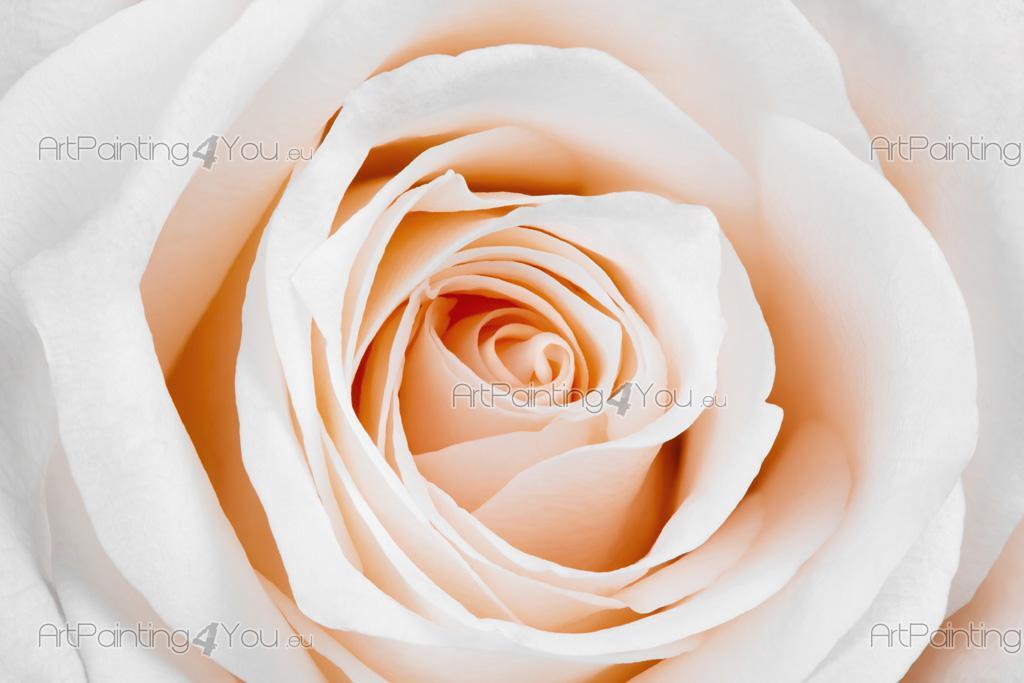 Carta Da Parati Rosa Bianca : Carta da parati & poster rose fiore artpainting4you.eu® mcf1114it