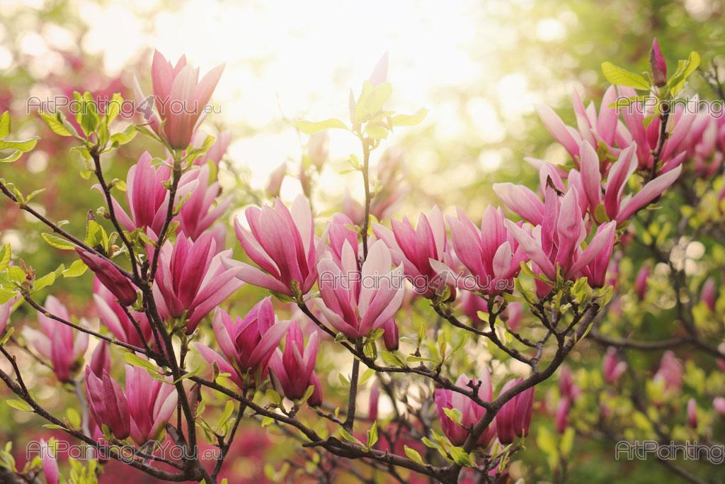 Papier Peint Poster Fleur De Magnolia Artpainting4you Eu