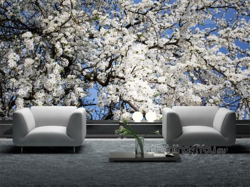 Cherry Blossoms - Wall Murals Flowers & Posters