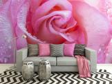 Rose - Wall Murals Flowers & Posters