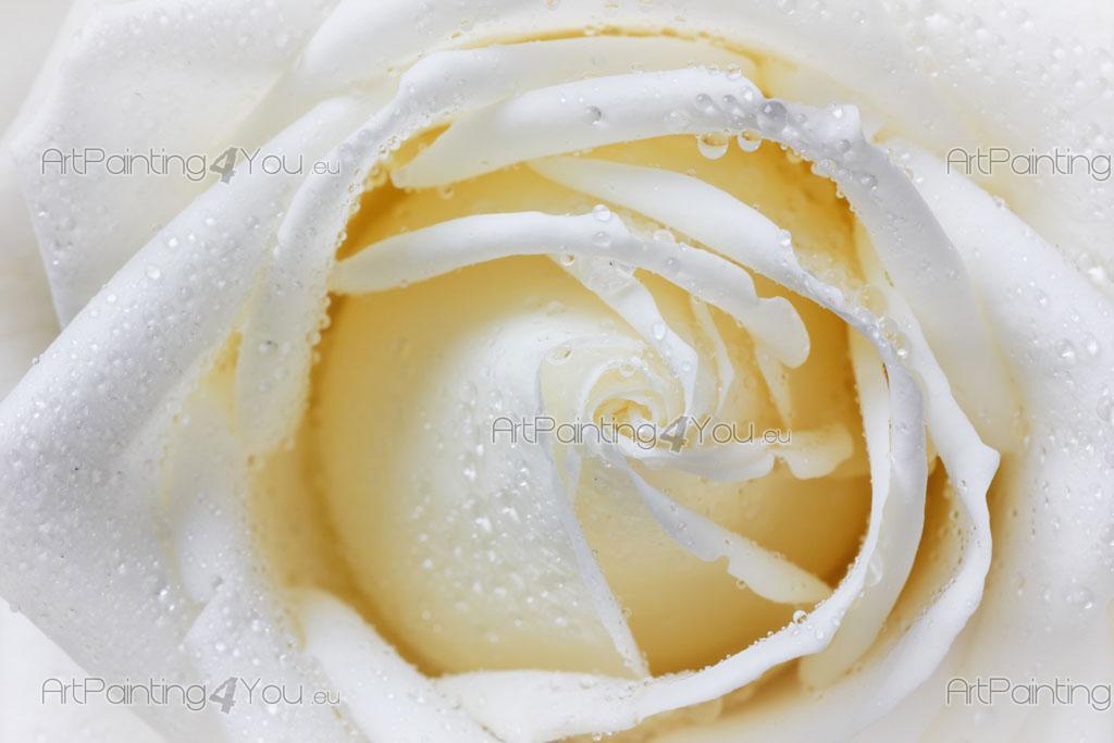 Carta Da Parati Rosa Bianca : Carta da parati & poster rose artpainting4you.eu® mcf1138it