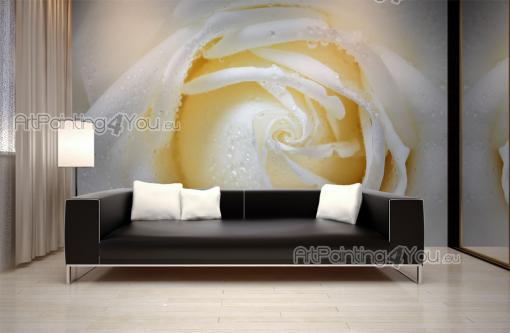 White Rose - Wall Murals Flowers & Posters