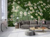White Daisy Flowers - Wall Murals Flowers & Posters