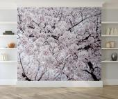 Cherry Blossoms Sakura - Wall Murals Flowers & Posters