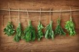 Fresh Herbs - Food and Drink Wall Murals & Posters