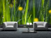 Wet Grass - Wall Murals & Posters