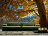 Fall Colors - Wall Murals Nature Landscape & Posters