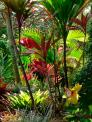 Tropical Garden - Wall Murals & Posters