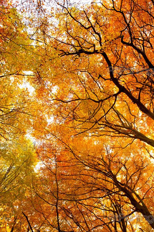 Fotomurales Pósters Personalizados árboles De Otoño