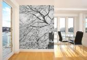 Cherry Blossoms - Black and White Wall Murals & Posters