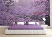 Cherry Blossoms - Zen and Spa Wall Murals & Posters