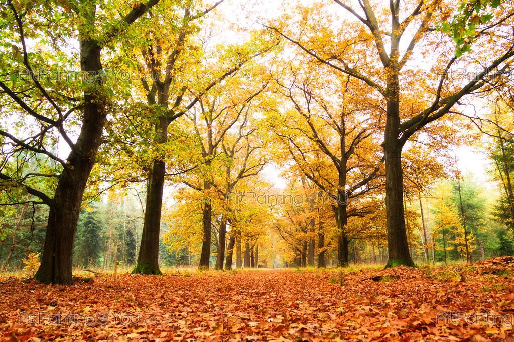 ... Autumn Day   Wall Murals Nature Landscape U0026 Posters Part 47