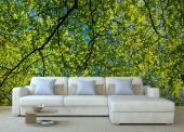 Spring Day - Wall Murals & Posters