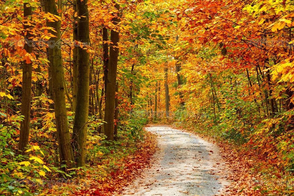 Fototapet landskap plakater lerretstrykk h st skog 2195no for Casa jardin winter park fl