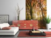 Autumn Trees - Wall Murals Nature Landscape & Posters