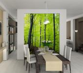 Forest - Wall Murals & Posters