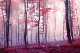Autumn Forest - Wall Murals Nature Landscape & Posters