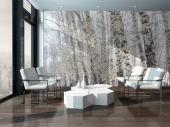 Aspen Trees - Black and White Wall Murals & Posters