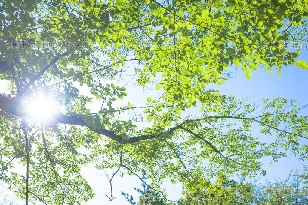 Carta da parati fotomurali paesaggi poster murali for Carta da parati alberi stilizzati